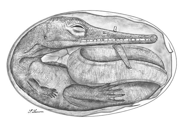 oldest-mesosaur-dinosaur-embryos-found-illustration_51643_600x450