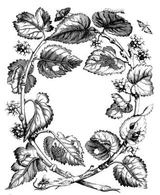 Engravings from Erucarum Ortus