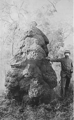 William Saville-Kent next to a termite nest mound