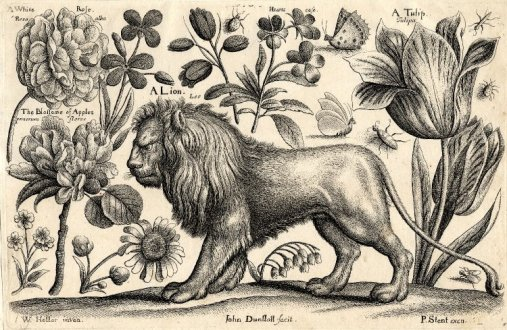 02-john-dunstall-after-wenceslaus-hollar-1653-1693-a-lion-surrounded-by-various-insects-and-plants-including-a-rose-apple-blossom-a-tulip-and-hearts-ease
